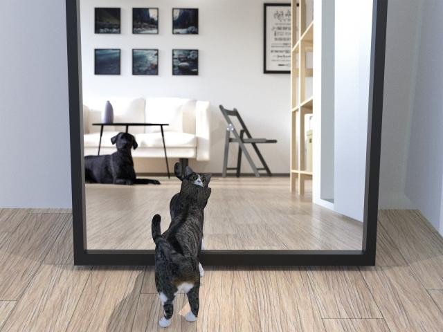 鏡を見る先には…